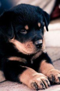 Elección de nuestro cachorro. ¿Qué debemos tener en cuenta?