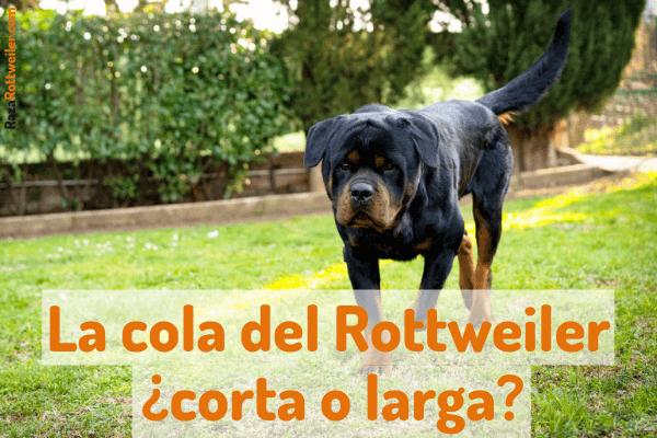 Cómo cortar la cola a un Rottweiler