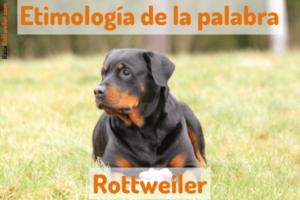 Como se escribe Rottweiler