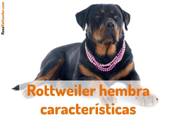 Rottweiler hembra