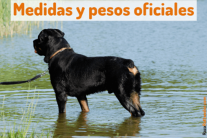 Rottweiler peso