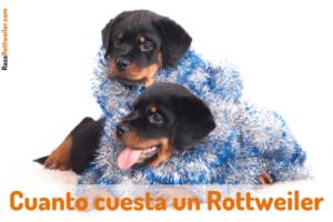 Rottweiler precio
